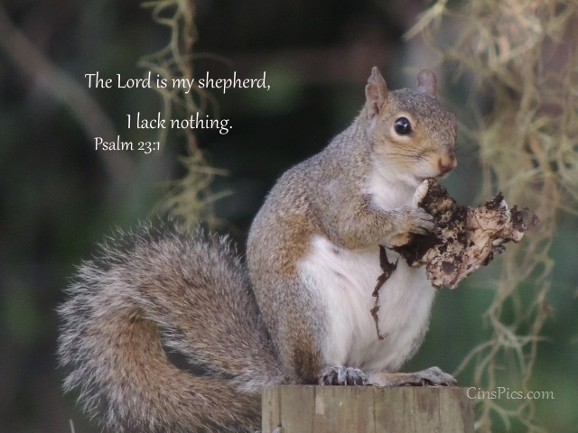 The Lord is my shepherd, I lack nothing. Psalm 23:1 by cinspics