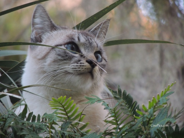 Cat in a tree by cinspics