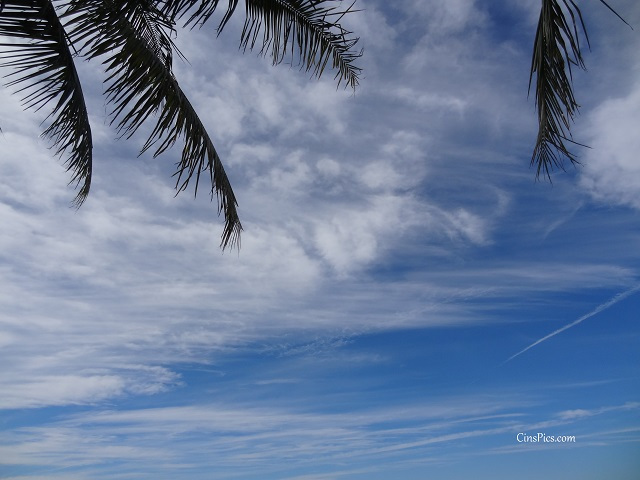 Palm tree clouds by cinspics