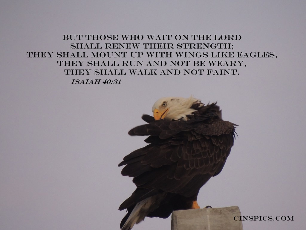 But those who wait on the Lord Shall renew their strength; They shall mount up with wings like eagles, They shall run and not be weary, They shall walk and not faint. Isaiah 40:31 by cinspics