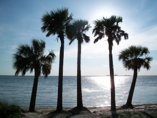 Palm Trees, Picnic Island - Tampa, Florida by cinspics