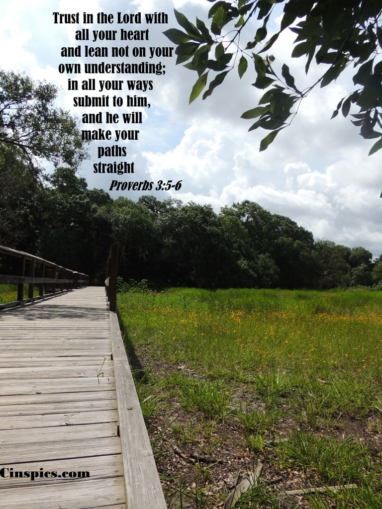 Trust in the LORD with all your heart and lean not on your own understanding;  in all your ways submit to him, and he will make your paths straight. Proverbs 3:5-6 by cinspics