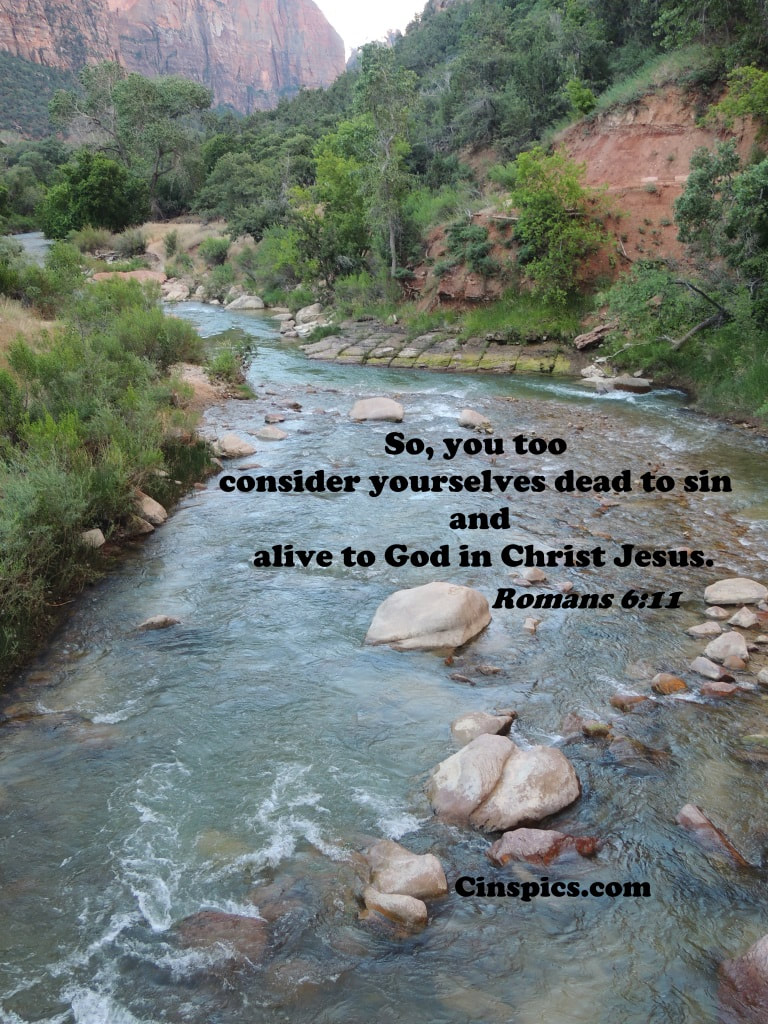 So, you too consider yourselves dead to sin and alive to God in Christ Jesus.  Romans 6:11 by cinspics